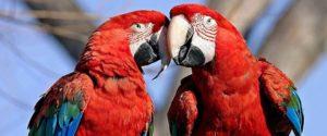 Попугаи на Садоводе недорого купить в Москве