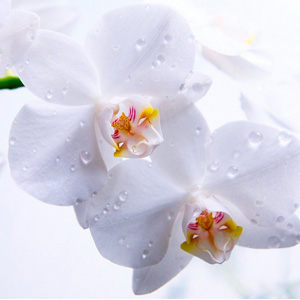 Цветы (живые и искусственные) на Садоводе в Москве купить оптом: цены
