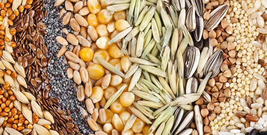 Семена на Садоводе купить. Магазин семян с отправкой почтой