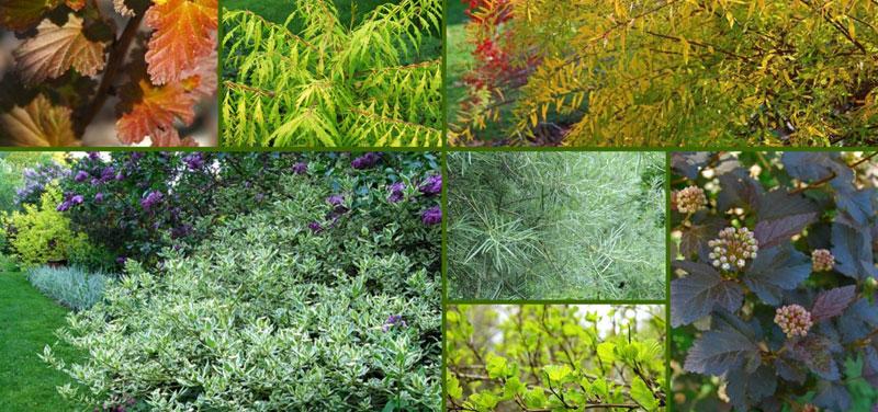 Растения на Садоводе (рынок в Москве) комнатные и для улицы. Питомник растений