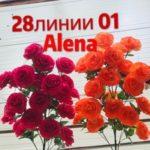 Alena Zhao - оптовый поставщик канцелярских товаров