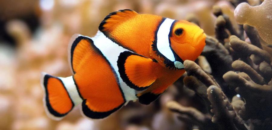 Купить аквариумные рыбки на рынке Садовод - фото и цены. Рыбки на Птичьем рынке