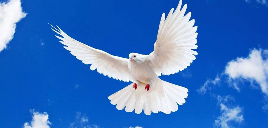 Голуби на Садоводе купить - открытие, литература