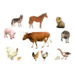 Животные на Садоводе (Птичий рынок) - цены на одежду и корма для животных